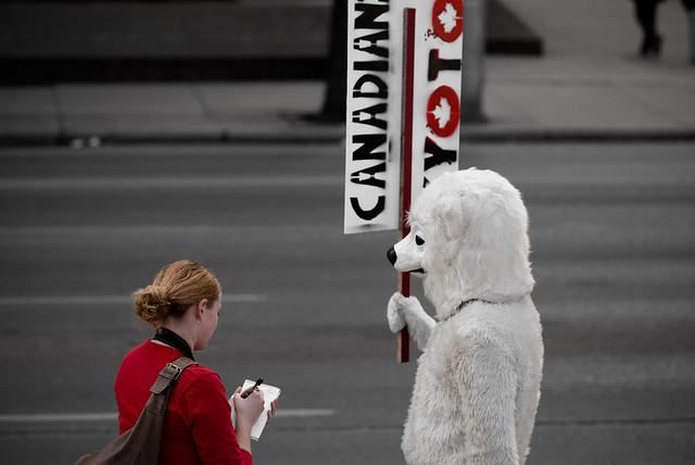 Polar Bear by Tavis Ford