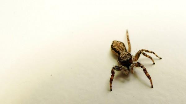 Suspense Spider
