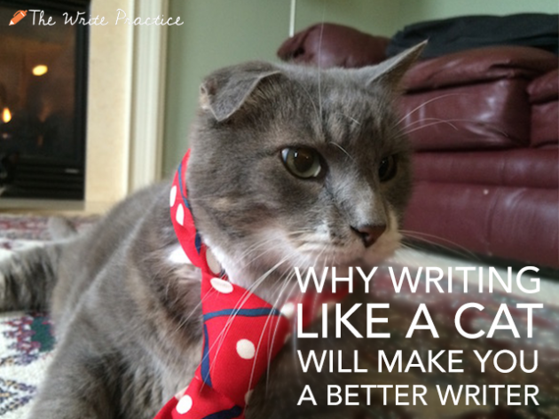 How can I write this cat essay?