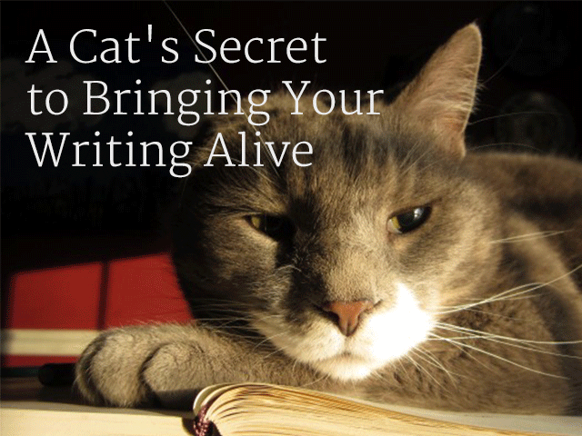 A Cat's Secret to Bringing Your Writing Alive